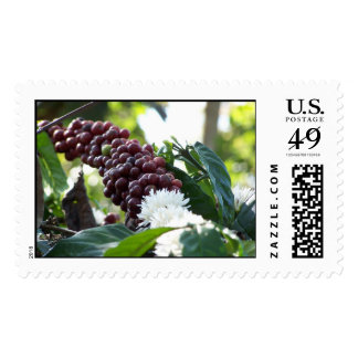 Coffee Cherries Postage