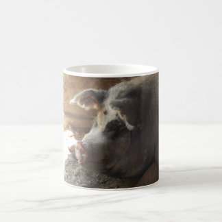 Coffee Mug Cup Fat Pig Picture