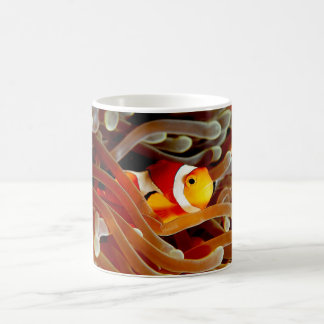 coffee mug showing a clown fish and anemone