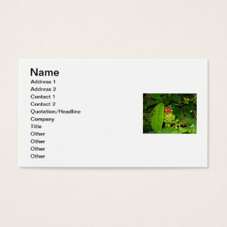 Coffee of Colombia Business Card
