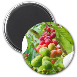 Coffee Tree Magnet