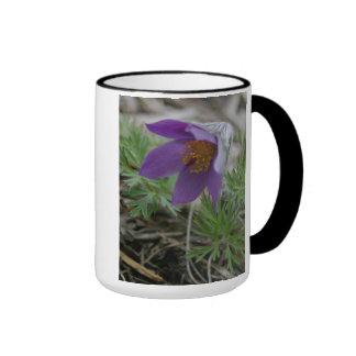 Coffeemugs púrpuras del flor de la flor de pasque taza