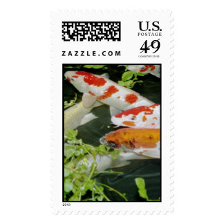 Coi swimming a water garden postage