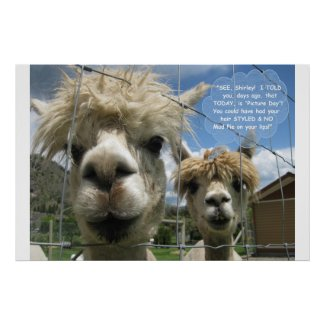 Coiffed & Uncoiffed for 'Picture Day', Alpaca