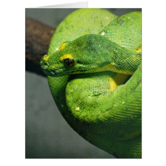 Coiled Green Tree Snake Card