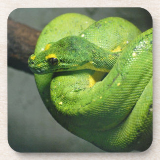 Coiled Green Tree Snake Beverage Coaster