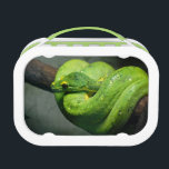 """Coiled Green Tree Snake Lunch Box<br><div class=""""desc"""">This product features a striking photo of a green tree snake,  coiled up and resting on a branch. It&#39;s vibrant green scales and slightly eerie reptilian gaze make this snake really stand out. It would make a great gift for anyone who has a passion for reptiles and snakes.</div>"""