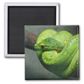 Coiled Green Tree Snake Magnet