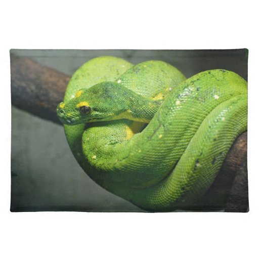 Coiled Green Tree Snake Placemats