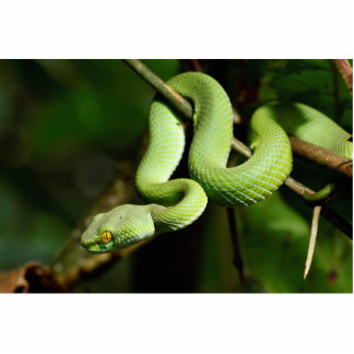 Coiled Green Tree Snake Statuette