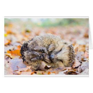 Coiled hedgehog lying on leaves in fall season card