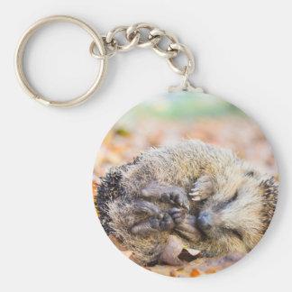 Coiled hedgehog lying on leaves in fall season keychain