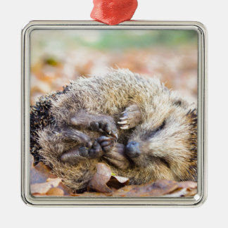 Coiled hedgehog lying on leaves in fall season metal ornament