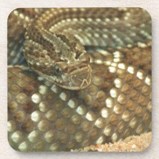Coiled Rattlesnake Drink Coaster