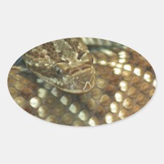 Coiled Rattlesnake Oval Sticker