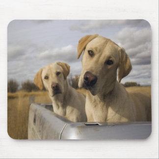 Coja los perritos Mousepad Tapete De Ratones