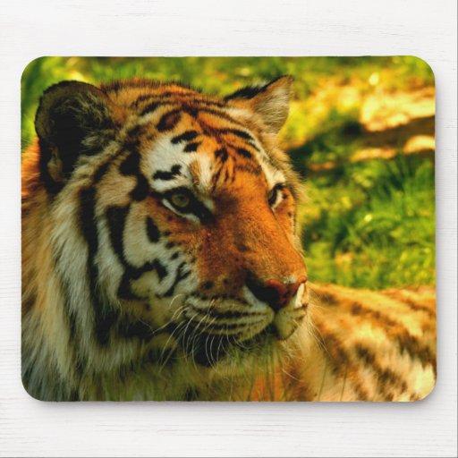 Cojín de los tigres alfombrilla de ratón