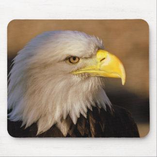 Cojín de ratón americano de Eagle calvo Tapetes De Ratones