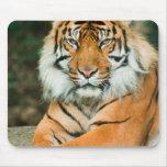 Cojín de ratón anaranjado del tigre tapetes de raton
