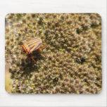 Cojín de ratón anaranjado y negro del escarabajo tapete de ratones