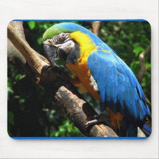 Cojín de ratón azul del Macaw Alfombrillas De Raton