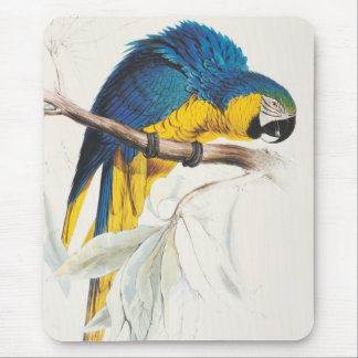 Cojín de ratón azul y amarillo del Macaw Alfombrillas De Ratón