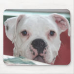Cojín de ratón blanco de la foto del perro del box tapetes de ratones