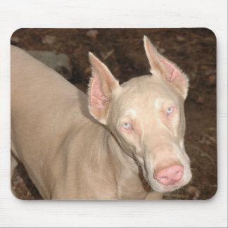 Cojín de ratón blanco del Doberman Alfombrilla De Ratones