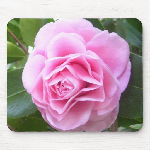 Cojín de ratón - camelia del rosa color de rosa tapetes de raton