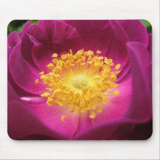 Cojín de ratón: Color de rosa Alfombrilla De Ratón