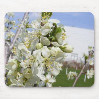 Cojín de ratón con la flor de la primavera tapetes de ratón