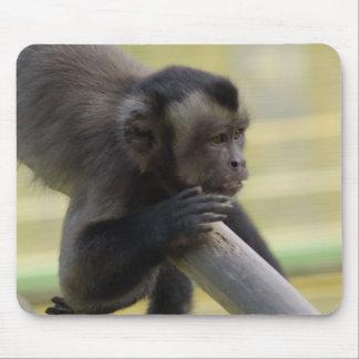 Cojín de ratón copetudo del mono del capuchón alfombrillas de raton