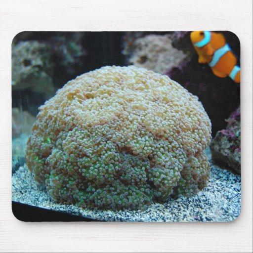cojín de ratón coralino de la freza de la rana tapetes de ratón