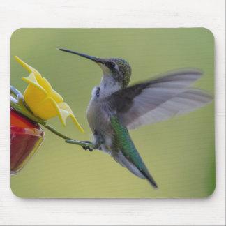 Cojín de ratón de alimentación del colibrí tapete de ratón