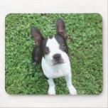 Cojín de ratón de Boston Terrier Tapetes De Ratones