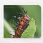 Cojín de ratón de Caterpillar de la mariposa del F Alfombrilla De Ratón