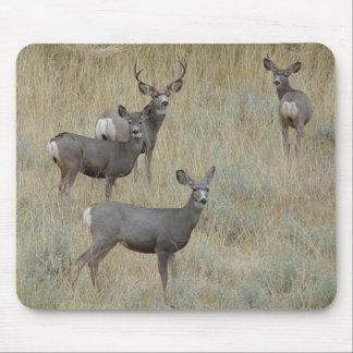 Cojín de ratón de ciervo mula D0018 Alfombrillas De Ratones