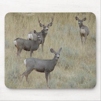 Cojín de ratón de ciervo mula D0018 Alfombrilla De Ratones