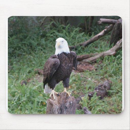 Cojín de ratón de Eagle calvo Alfombrilla De Ratón