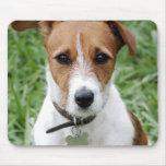 Cojín de ratón de Jack Russell Terrier Alfombrillas De Ratón