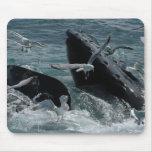 Cojín de ratón de la ballena jorobada tapete de raton