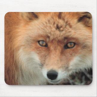 Cojín de ratón de la especie del Fox Alfombrilla De Ratón