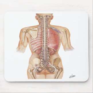 Cojín de ratón de la espina dorsal del Netter Alfombrillas De Ratones