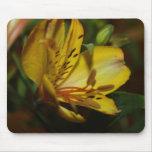 Cojín de ratón de la flor del Alstroemeria Alfombrilla De Raton