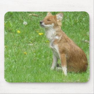 Cojín de ratón de la foto del Fox Alfombrillas De Ratón