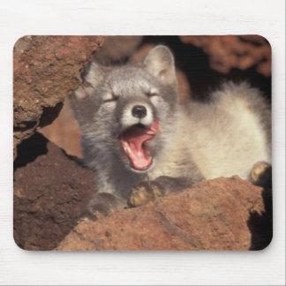 Cojín de ratón de la guarida del Fox Tapetes De Raton