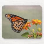 Cojín de ratón de la mariposa de monarca tapetes de ratones