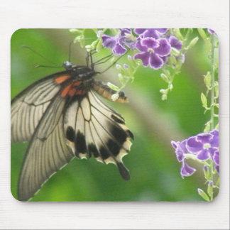 Cojín de ratón de la mariposa de Swallowtail Tapete De Ratones