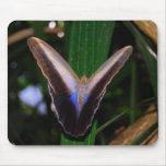 Cojín de ratón de la mariposa alfombrillas de ratón