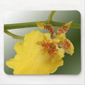 Cojín de ratón de la orquídea tapete de ratones